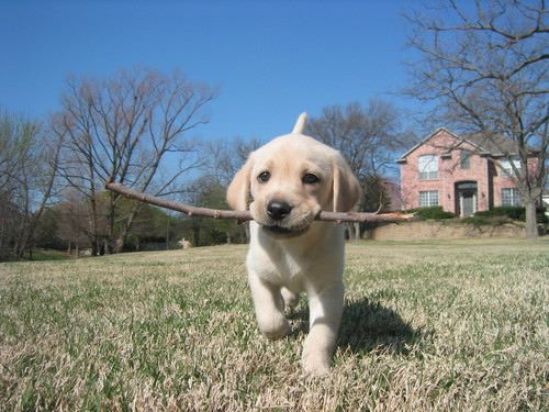 puppy playing fetch