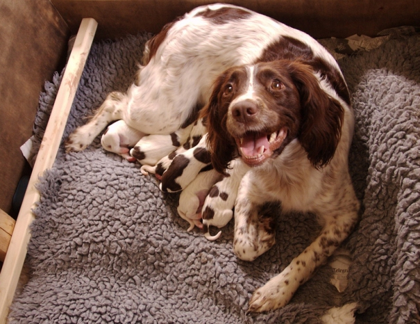 New mom and puppies