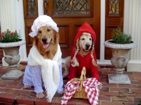 Little red riding pup and the big bad wolf dog
