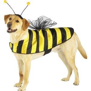 bumblebee puppy